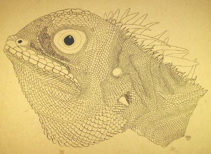 The Incredible Shrinking Man The Shrinking Iguana